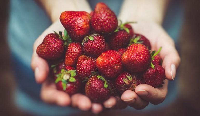 دوره پرورش توت فرنگی